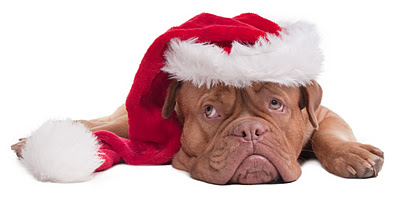 7 Tips For Post Christmas Survival